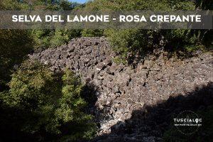 SELVA DEL LAMONE ROSA CREPANTE